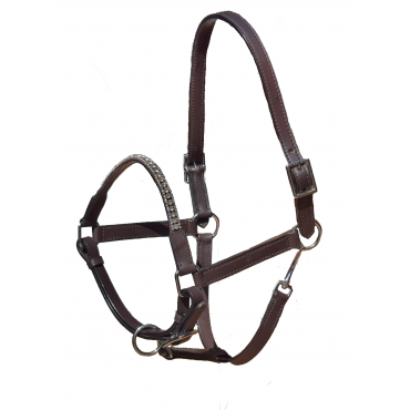 Halter Young Horses 3 Row