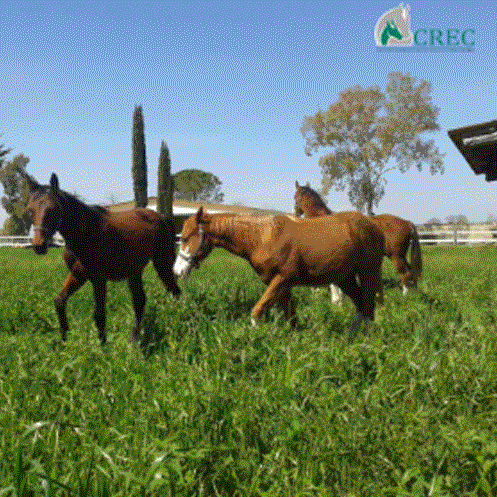 Foal weaning: a delicate band